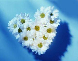 Bunga – bunga cinta